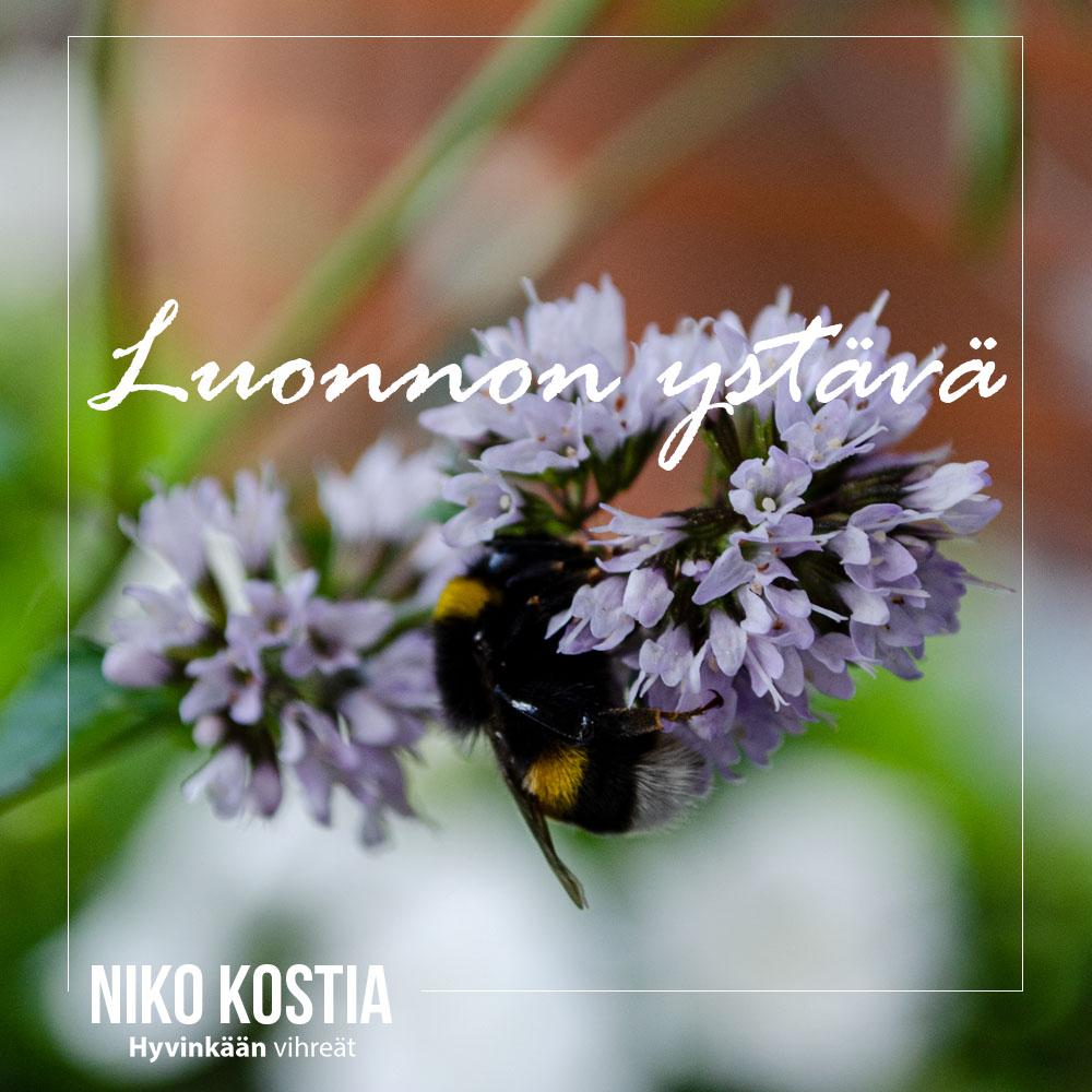 Kuvitus: Luonnon ystävä. Mehiläinen yrttioksalla.